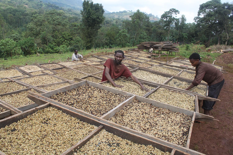 Äthiopische Kaffeeproduzenten 1