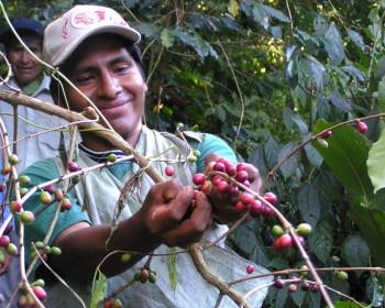 Bolivianische Kaffeeproduzenten 1