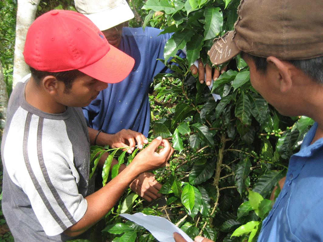 Nicaraguanische Kaffeeproduzenten 1