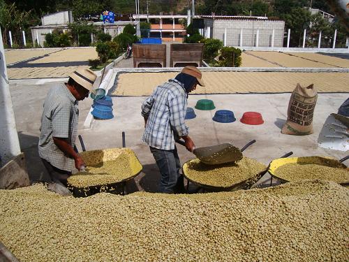 Guatemaltekische Kaffeeproduzenten 1